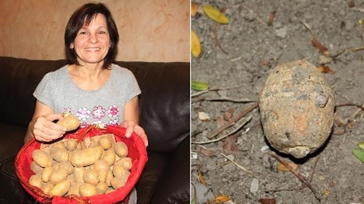 """Granat zamiast ziemniaka. Francuzka """"na obiad"""" kupiła niewypał z 1917 roku"""