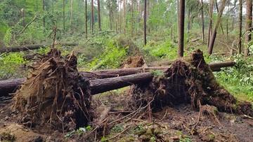 Potężna trąba powietrzna zniszczyła kilkanaście hektarów lasu na Mazurach