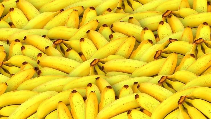 Holandia. Celnicy znaleźli i przejęli 700 kg kokainy ukrytej w bananach