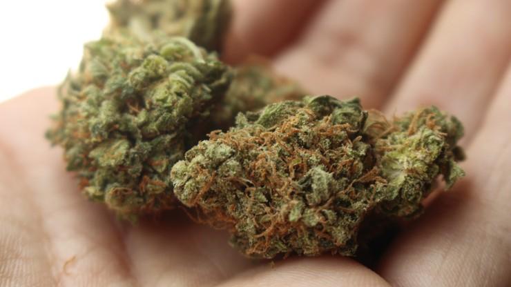 Lekarz przepisał 4-latkowi ciastka z marihuaną. Teraz może stracić lekarską licencję