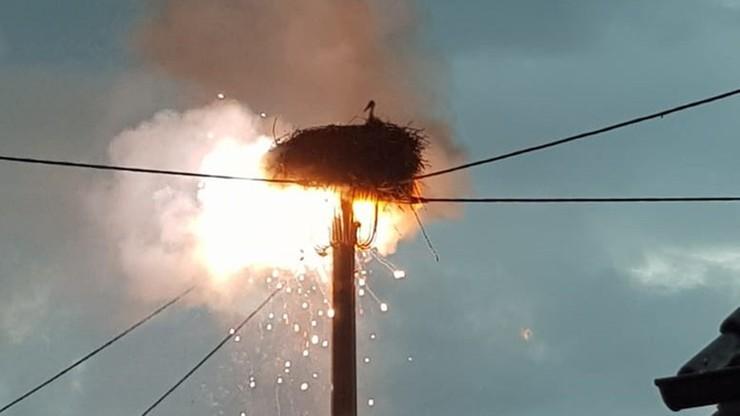 Niemcy. Pożar po uderzeniu pioruna. Strażacy uratowali młode bociany przed ogniem