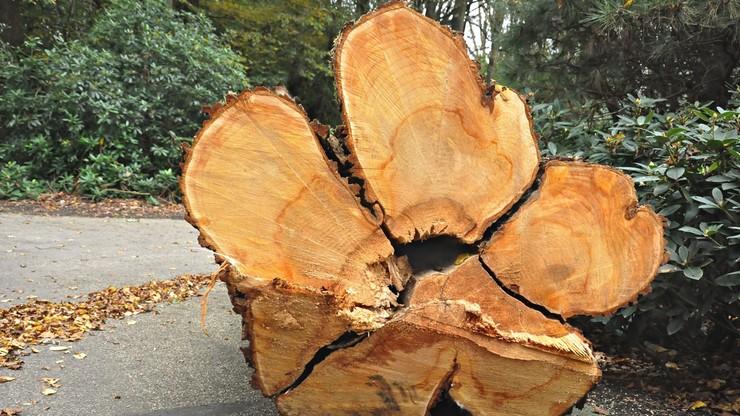Prezydent podpisał nowelę ustawy dot. wycinki drzew na prywatnych gruntach