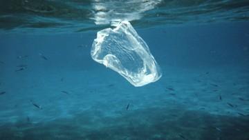 O połowę mniej foliowych torebek w morzach. To efekt wprowadzenia opłat w Wielkiej Brytanii