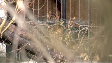 Pies pogryzł 6-latka. Lekarze walczą o życie dziecka