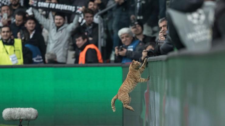 Liga Mistrzów: Besiktas Stambuł ukarany za... wbiegnięcie kota na boisko!
