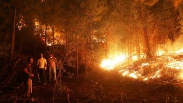 Wielkie pożary lasów w Chile. Są ofiary śmiertelne