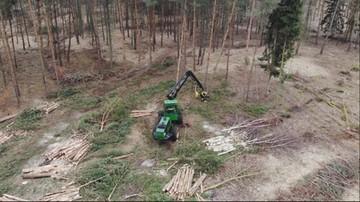 Ekolodzy skarżą do Komisji Europejskiej przekop Mierzei Wiślanej. Wycinka lasu ruszyła w piątek