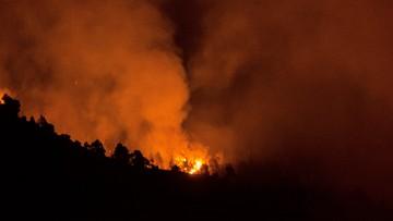 """Załatwiał w lesie """"potrzebę"""", podpalił papier toaletowy. Pożaru lasu dotąd nie ugaszono"""