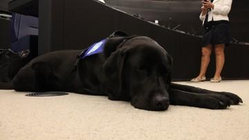 Pies pomaga ofiarom podczas rozpraw w sądzie