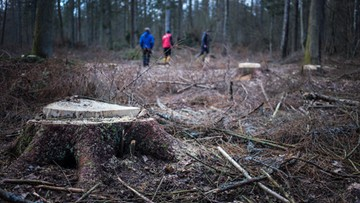 Rada Naukowa Leśnictwa: jedyną metodą prowadzenia gospodarstwa leśnego jest siekiera