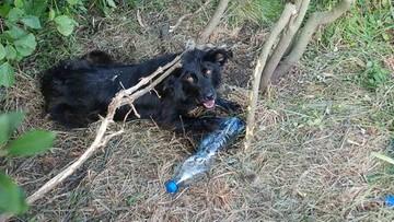 Przywiązał psa do drzewa i odjechał. Zwierzę było skrajnie wyczerpane