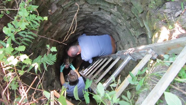 Wydobyli wilka ze studni. Trafił do kliniki dla zwierząt