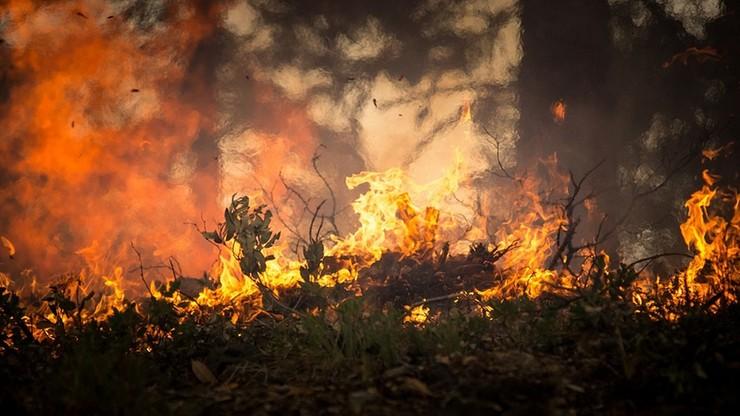 Pożar pięciu hektarów lasu w Puszczy Kozienickiej. Z ogniem walczy 15 zastępów straży pożarnej