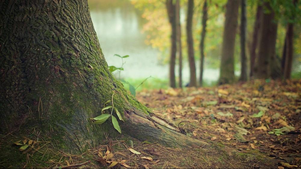 Najnowsze badania pokazują, jak dużo lasów odrosło naturalnie od 2000 roku