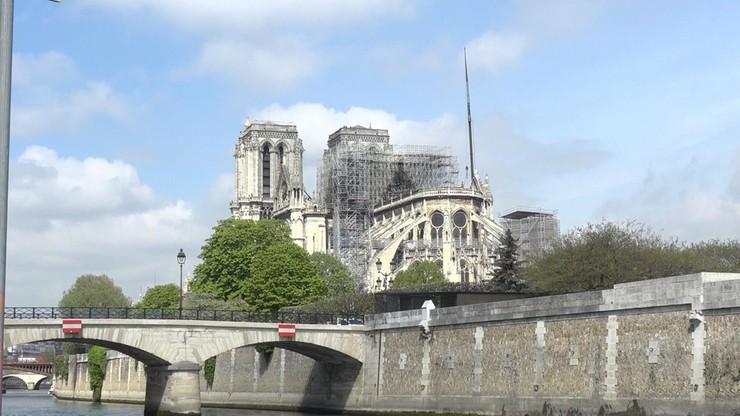 Do odbudowy Notre Dame chcą użyć starych dębów. Ekolodzy protestują