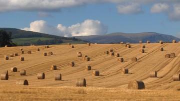 """Ekspertka: prawo """"ziemia tylko dla rolników"""" stworzy nową korporację"""