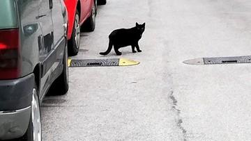 Wandal miał pecha. Wpadł przez... czarnego kota