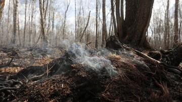 Mapa zagrożenia pożarowego lasów. Gdzie jest najbezpieczniej?