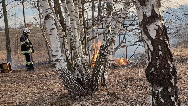 Pożar w lesie koło Oświęcimia. Strażacy znaleźli zwęglone zwłoki