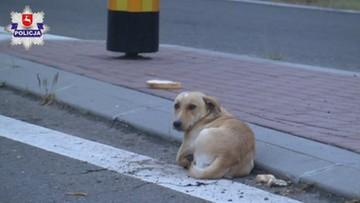 Wyrzucił psa z auta i odjechał. Usłyszał zarzut znęcania się nad zwierzętami