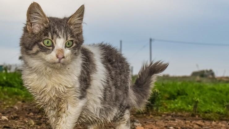 Ukraina zaostrza kary za znęcanie się nad zwierzętami. Zakaz zabijania bezdomnych psów i kotów