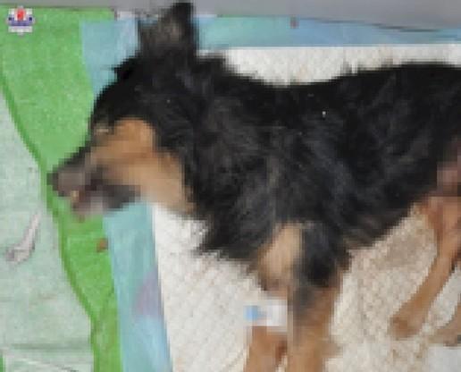 Zakopany żywcem w ziemi pies zdechł po kilku dniach