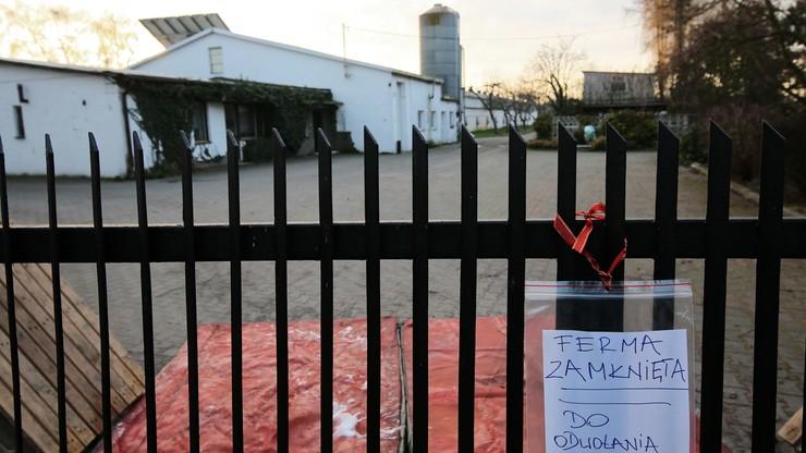 Wirus ptasiej grypy w Polsce. Zlikwidowano już ok. 200 tys. ptaków