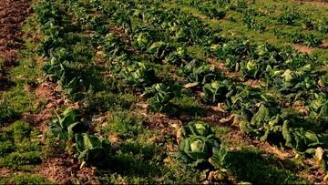 Żywność zdrożeje przez brak pracowników sezonowych