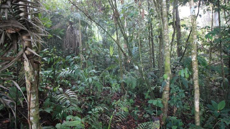 Rodzina zaginęła w dżungli. Poszukiwania trwały 34 dni