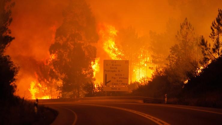 Ogromny pożar lasów w Portugalii. Rośnie bilans ofiar