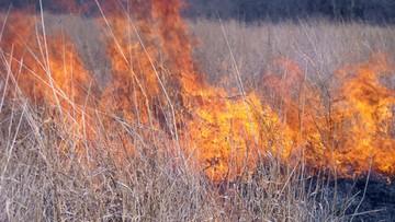Śmiertelna ofiara wypalania traw w Poznaniu