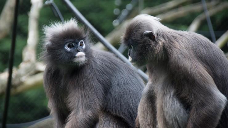WWF alarmuje: od 1970 populacje zwierząt mniejsze o ponad 66 proc.