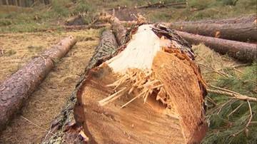 Gigantyczna kara za nielegalną wycinkę drzew. Właściciel działki musi zapłacić blisko 15 mln zł