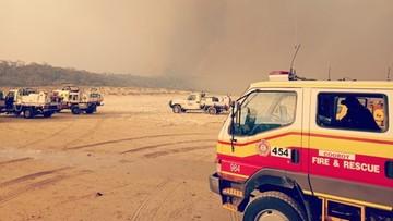Rekordowe upały w Australii. Ogień trawi rajską wyspę
