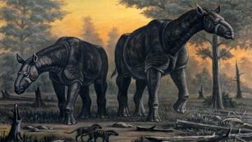 Wymarły gatunek nosorożca wyższy od żyrafy. Odkryto go w Chinach