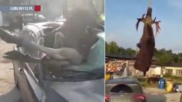 Uderzony przez auto łoś wpadł wprost na fotel pasażera. Wyciągał go dźwig