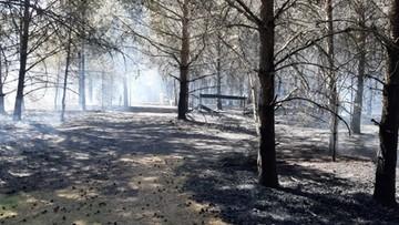 Pożar we Wdzydzkim Parku Krajobrazowym. Samolot gasił 5 ha lasu