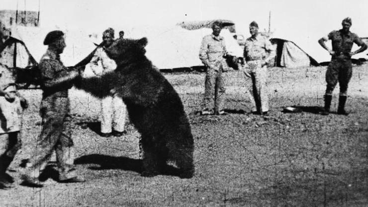 W Cassino stanie pomnik niedźwiedzia Wojtka