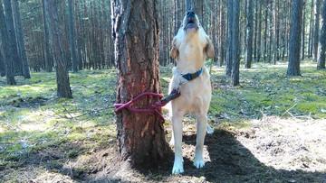 Zwyrodnialec przywiązał psa do drzewa w środku lasu