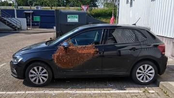 20 tys. pszczół obsiadło auto. Zdesperowany właściciel wezwał policję