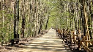 23.04.2021 00:00 Oznaki wiosny w lesie (4K)