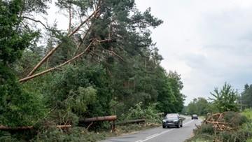 Potężna trąba powietrzna przeszła nad woj. śląskim. Zniszczyła 1500 ha lasów