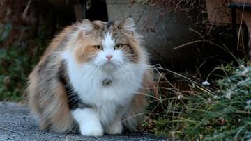 Naukowcy zbadali, jak tyją koty