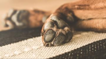 Niemiecki turysta zabił młotkiem psa. Był pijany