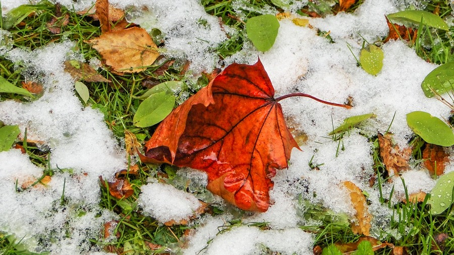 Wyjątkowo wczesny śnieg w połowie października 2009 roku we Wrocławiu. Fot. TwojaPogoda.pl