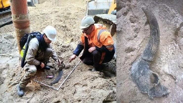 Nie tur lecz prażubr. Specjalista o tajemniczych kościach wykopanych na budowie warszawskiego metra