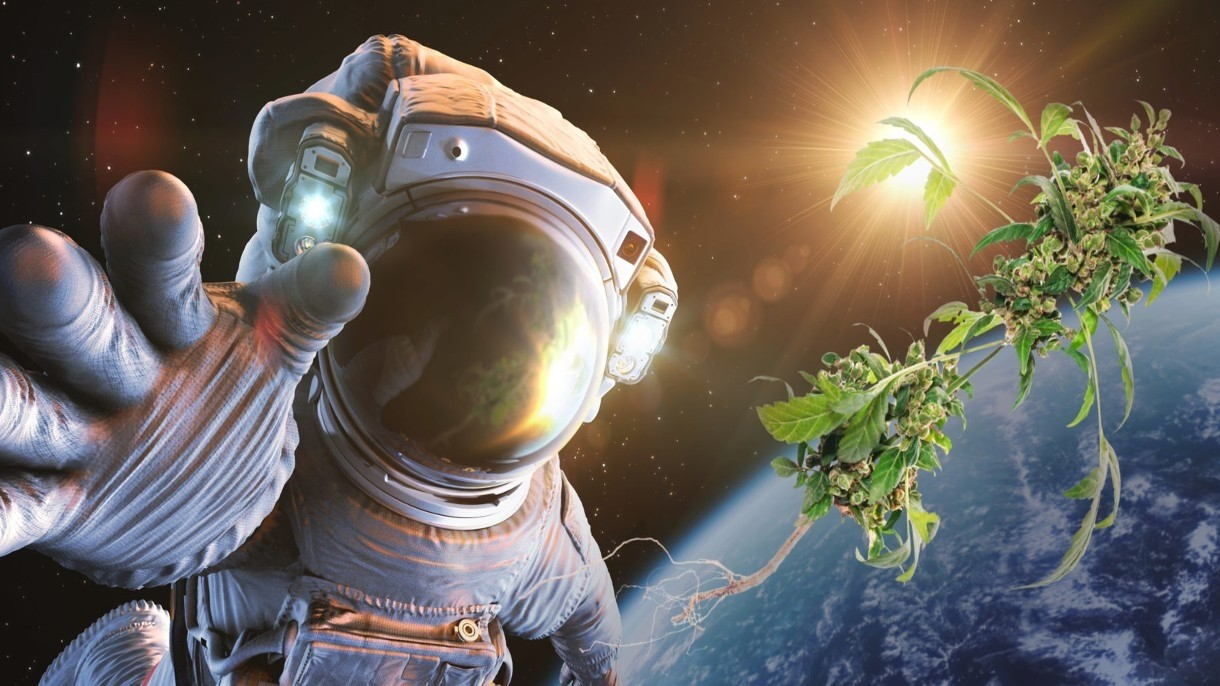NASA dostarcza astronautom, za pomocą SpaceX, zapas konopi indyjskich