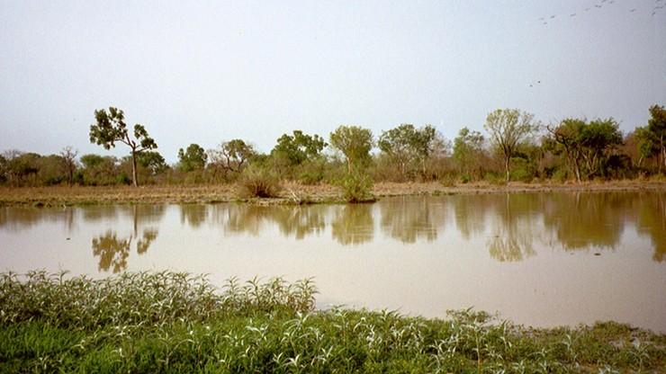 Utonęli w rzece przygnieceni przez drzewa. Tragedia w Ghanie