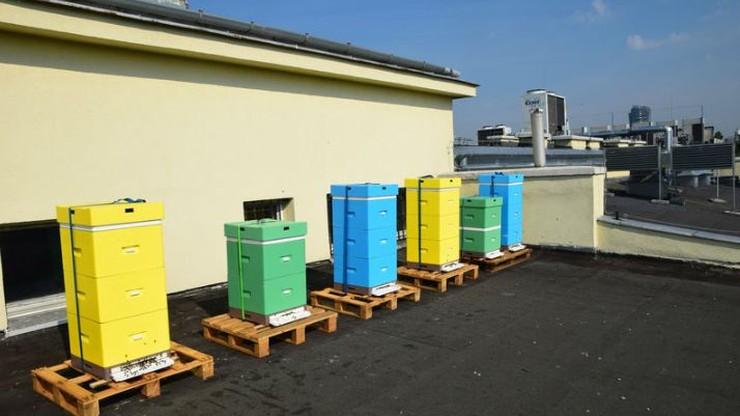 """Ule na dachu resortu środowiska. """"Rola pszczół w ekosystemie jest nieoceniona"""""""