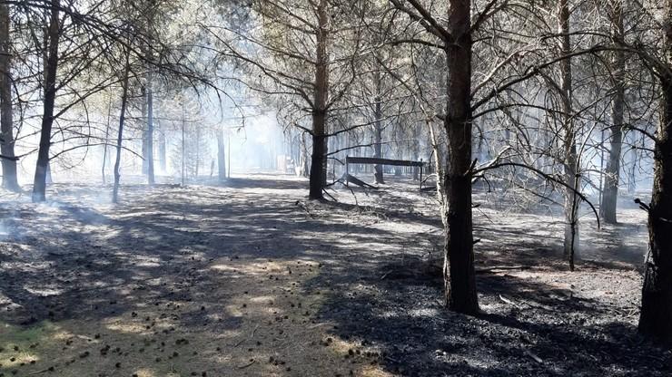 Pomorskie: pożar lasu w miejscowości Gołuń. Użyto samolotu gaśniczego